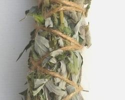 Bâton de plantes 'Transformation'