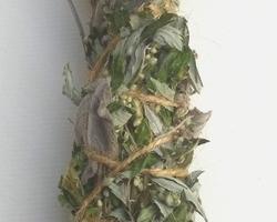 Bâton de plantes 'Cicatrisation / Lumière'