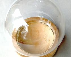 Moyenne boule de Calendula
