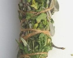 Bâton de plantes 'Purification'