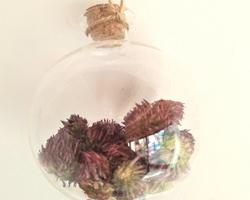 Trèfle rouge - Générosité