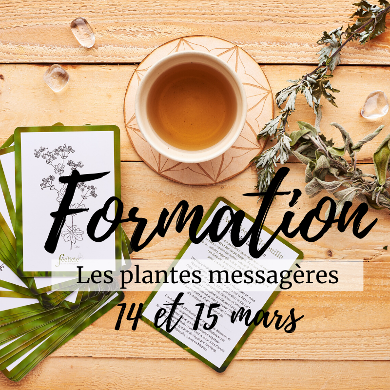 "Formation ""Plantes Messagères - Initiation"""